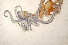 Octosquids