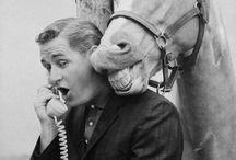 Mr Ed talking horse TV show