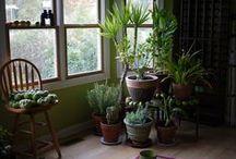 plantes sans lumière