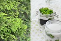 """Rezepte für die Gesundheit / natürliche Zutaten für natürliche """"Mittelchen"""" für kleine Krankheiten"""