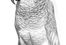 Papagalous