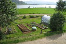 My garden / Min hage