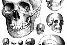 Skulls / by Glenn Harvey