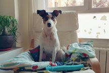 My dog Vito / Dog perro bodeguero andaluz