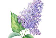 Çiçek çizimi