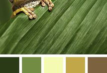 //colorpalettes