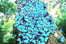 ~ Butterfly L*O*V*E ~