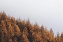 Autumn shades / Autumn