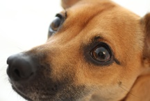 Cutest Dog in the World: Brando / by Dotan Negrin