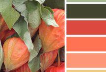 Kolory / colors