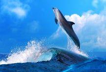 El agua de delfín