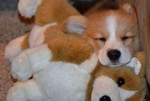Mmmmm...puppies