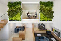 Zielone ściany : Zielone biuro