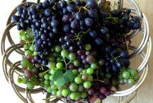 Vindruegele / Har man vindruer i haven eller drivhuset, er der som regel mange flere, end man kan spise. Hvad kan man så gøre ved alle de dejlige druer? Du kan lave en skøn gele af de sidste druer, og det gør ikke noget, de er sure. Du får her fra Smagsløgene en opskrift til at lave en nem vindruegele, som kan bruges til mange forskellige ting.