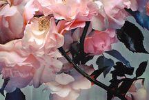 Garden / Beautiful things in the garden / by Teresa Peters