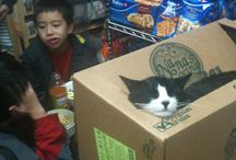 Ode to bodega cats