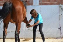 Centro Ecuestre / Nuestros caballos