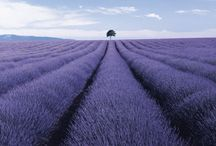 Provence / by Andra Stringer
