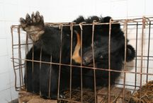 Chineese torture animals and they call it culture.