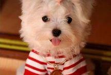 So cute / by laurie Buchanan