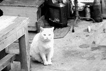 pisica noastra