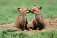 Love and Kisses <3 / by Kirsti Hanech