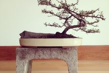Bonsai and terarrium
