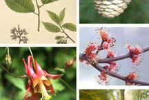 Botany [Botanical] / This board is filled with tools and resources to help you improve your botany skills. From plant identification charts to photos of leaves, twigs, and trees to books and botany products. There's something for everyone with a desire to further their botany skills.