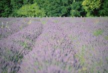Frühling in La Gacilly / Blaubeeren, Calendula und Kapuzinerkresse beginnen eine bunte Show! Die Bilder stammen von unseren Bio-Feldern Gacilly. Dort werden die Pflanzen angebaut, um Euch die beste Pflanzen-Kosmetik zu liefern!