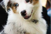 Cute doggy x