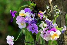 Flowers / ガーデニング、おうちのお花アイデア