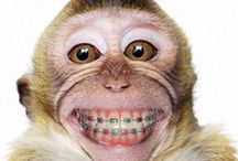 Animals with braces and more