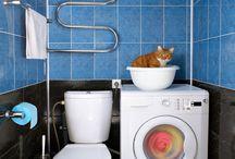 Kitties Health & Environment