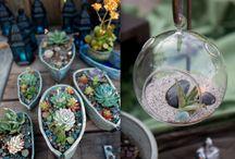 bonsai cacti