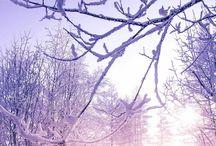 La beauté de l'hiver