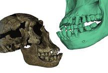 Skanery 3D Digitalizacja - muzealnictwo i archeologia / Skanery 3D pomagają dbać o dorobek kulturowy ludzkości. Digitalizacja zbiorów muzealnych, tworzenie wirtualnych muzeów, wspomaganie badań archeologicznych i palentologicznych mają na celu połączenie świata nauki z branżą nowych technologii.