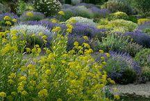 My Beauty Garden