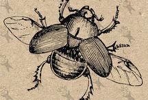 Vintage clipart - Insects