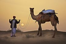 Camels and deserts