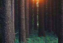 nature arbres