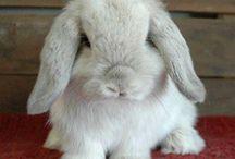 White bunnys