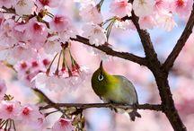 Birds / by Sherra Knowles