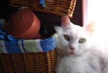 Memories of Pamuk ( she died in 2014) / My lovely cat my child and baby.