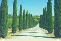 Travel | Tuscany with Kids