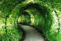 túnel verde