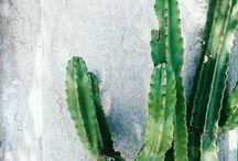 Creative plants