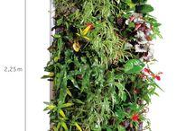 Mur vegetale