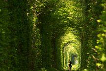 europian garden