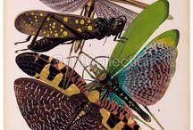 Biologi : Insekter