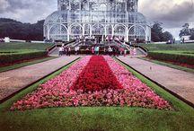Curitiba / Cidade linda e amorosa...Jardim luz cheio de rosas...Capital do Paraná.